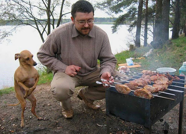 funny-hungry-dogs-begging-food-9-5b44ad50f3aa6__605.jpg