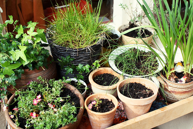 Spring-Gardening-on-your-Balcony.jpg